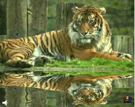 Tiger i anlæg
