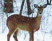 Postkort med vilde dyr