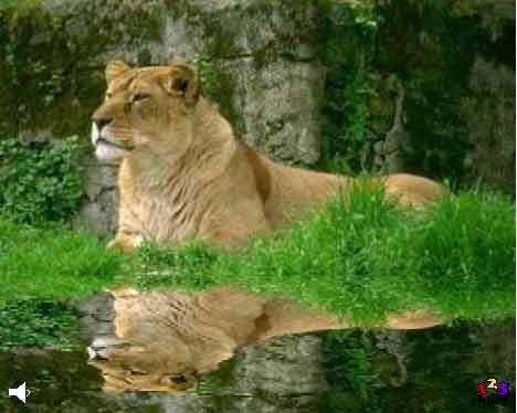 Løve i anlæg
