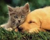 Gode venner