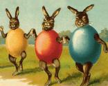 Dansende kaniner