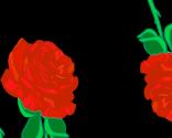 Faldende roser