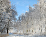 Den smukke vinter